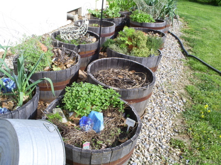 Annie McWilliams kitchen garden in containers CONTAINER GARDENING