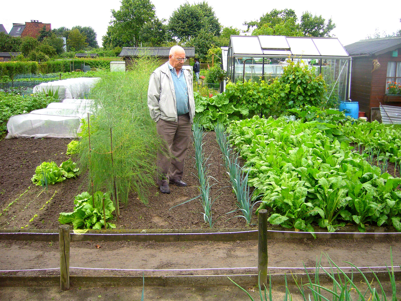 Vegetable gardening guide 2015 personal blog for Vegetable gardening guide