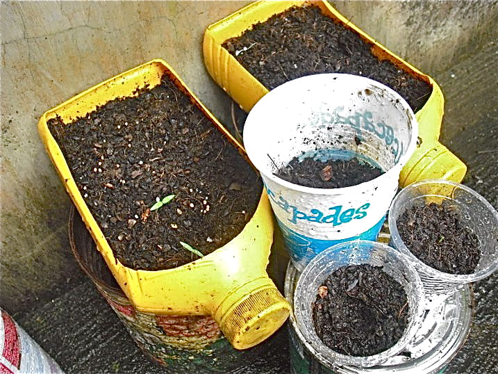 August 2011 container gardening - Recycled containers for gardening ...
