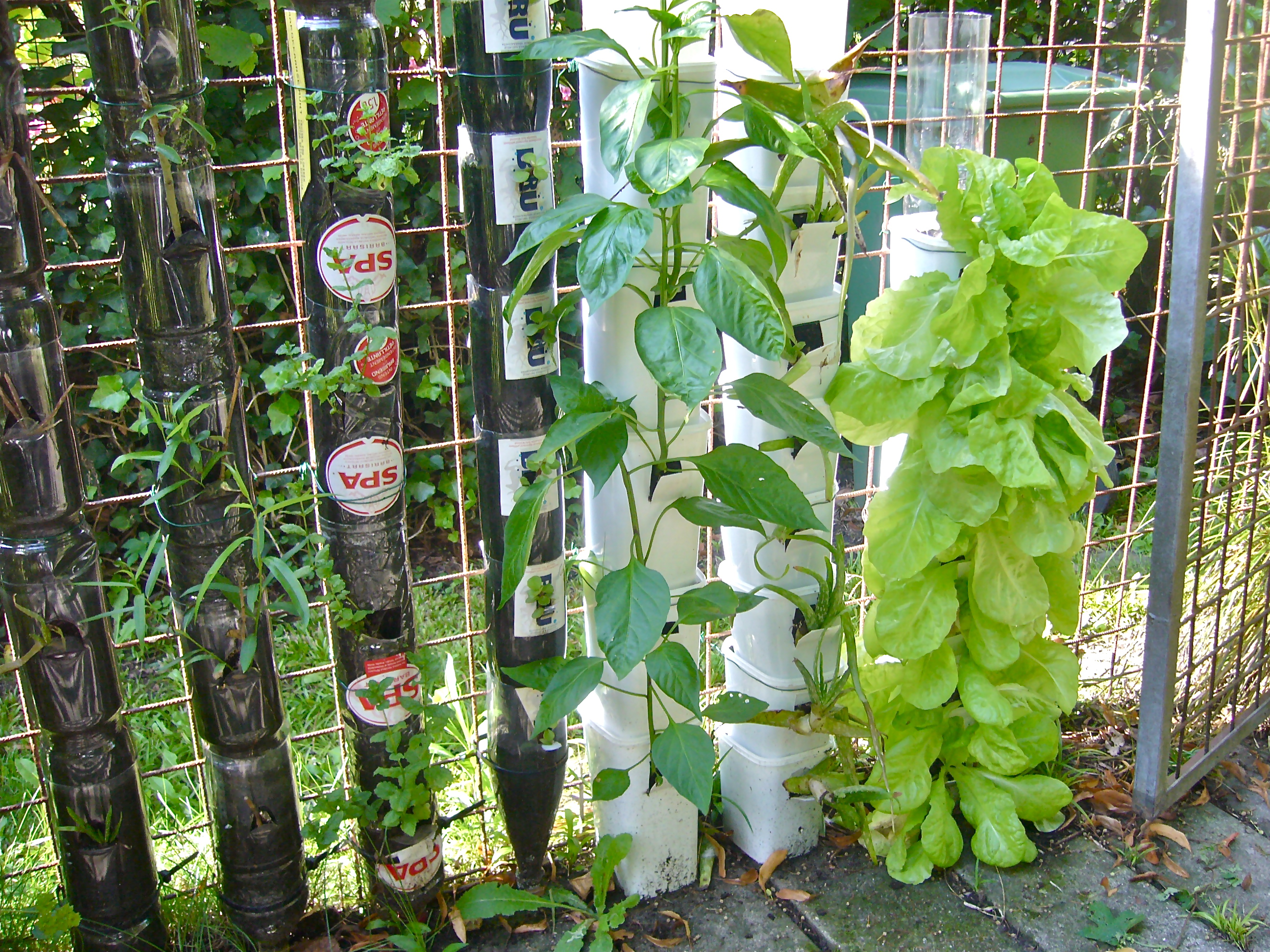 Vertical Vegetable Gardening Plastic Bottles 2643 x 1982