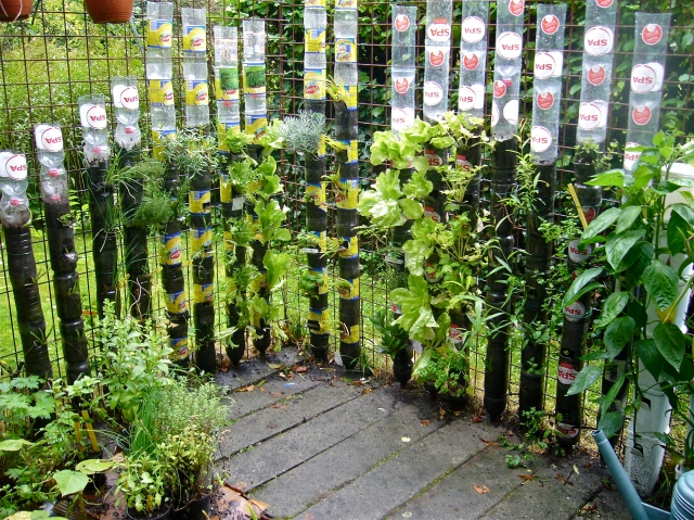 Vegetable vagabond the perfect edible windbreak for The perfect vegetable garden
