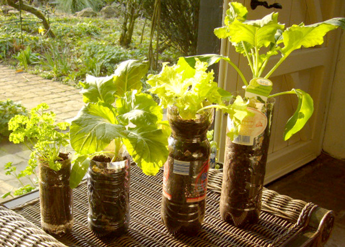 Growing Vegetables In Containers Growing vegetables and tree saplings in recycled bottles pots and 2007 02 workwithnaturefo