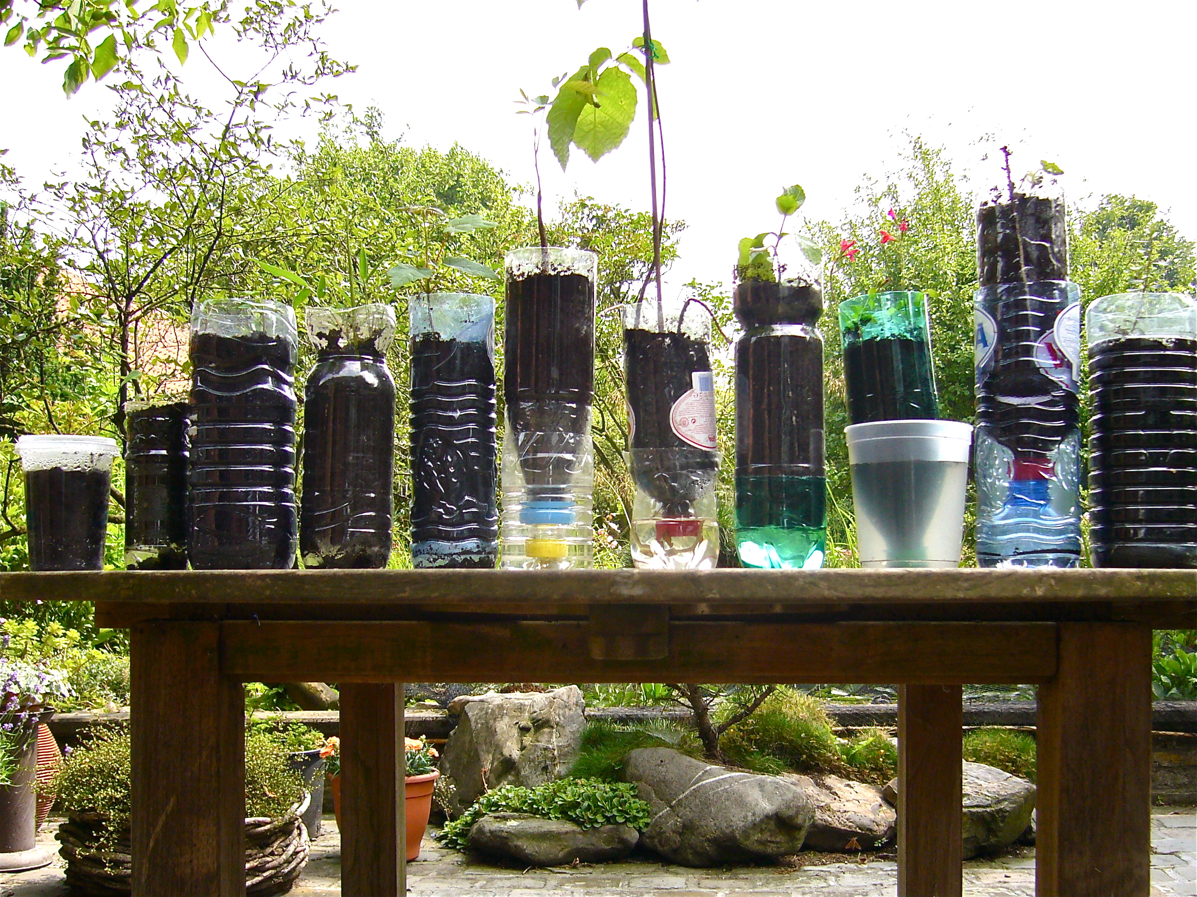 Growing vegetables and tree saplings in recycled bottles