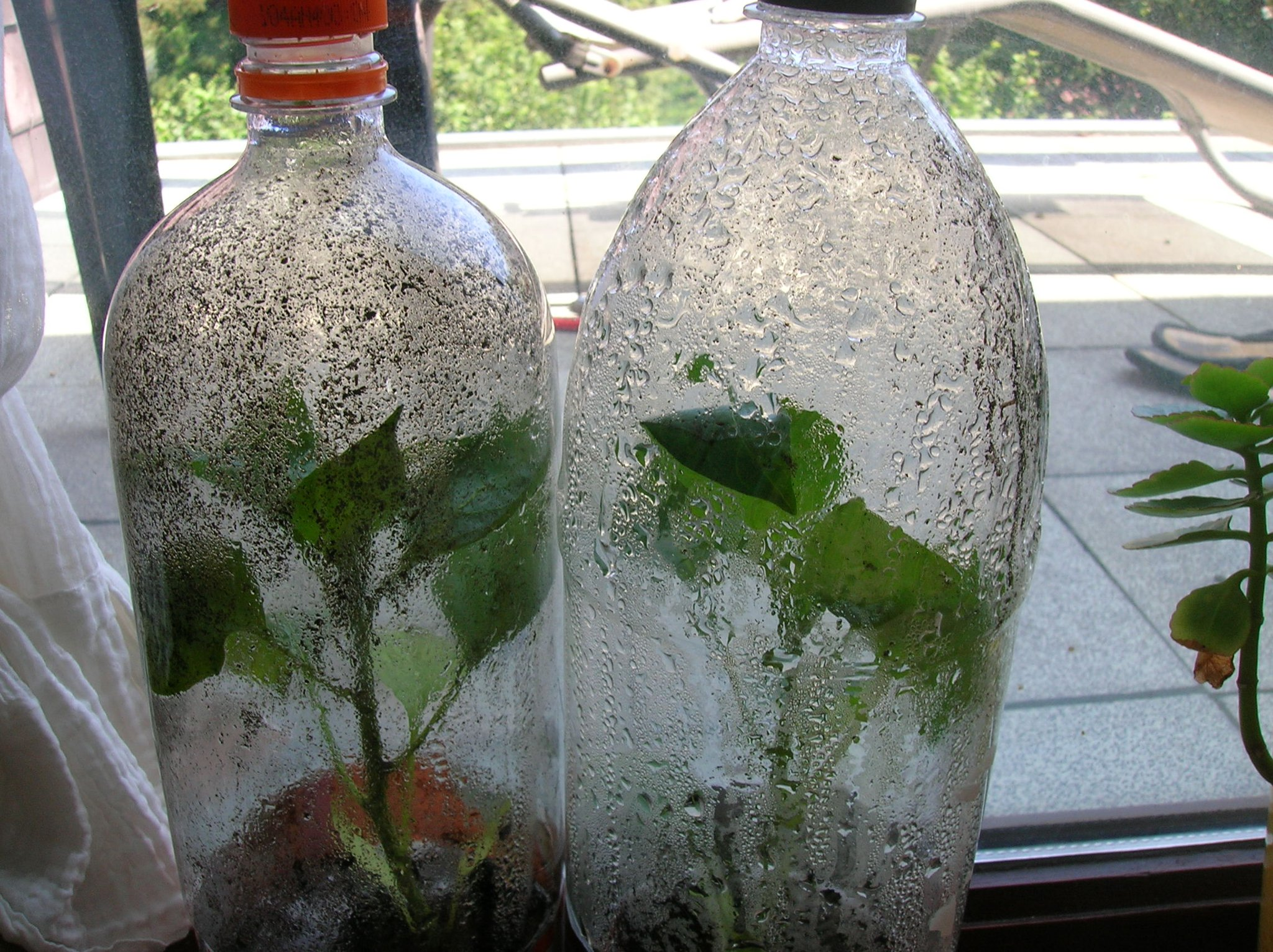 Recycle A Plastic Bottle Into A Very Simple Mini