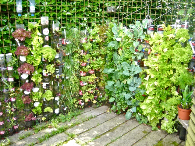 In a small space, bottle towers produce a mass of fresh vegetables and