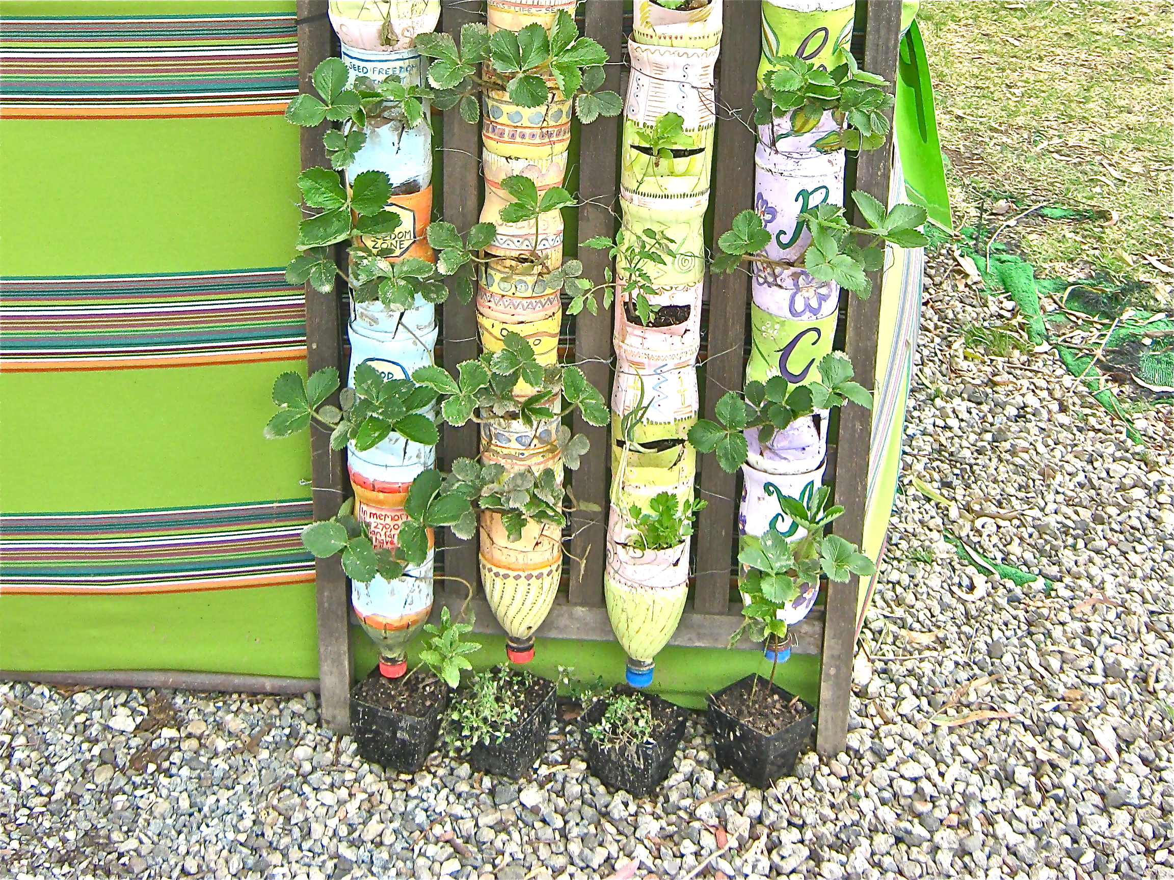 Gardening In Bottle : Bottle towers in Australia (Rachel CHRISTIAN) – CONTAINER GARDENING