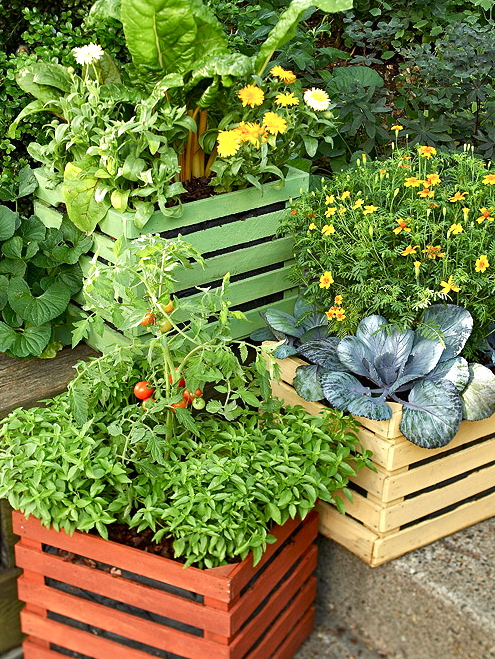 Growing Plants In Crates Willem Van Cotthem Container Gardening