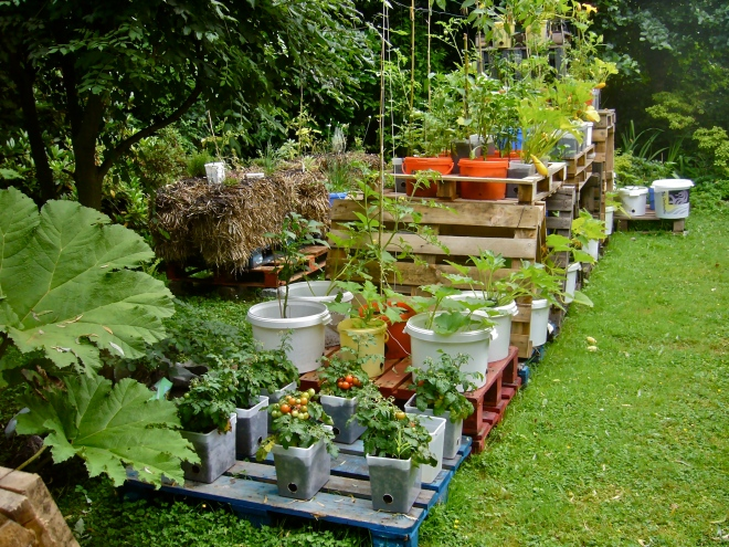 General view on my experimental pallet garden (Photo WVC)