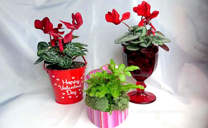 http://f.tqn.com/y/containergardening/1/S/I/L/-/-/3-inexpensive-valentines-containers.jpg