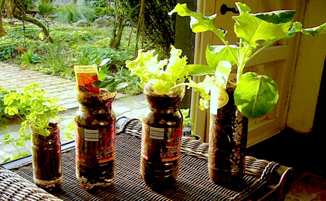Photo credit: WVC 2007-02 - Vegetables and herbs growing in a bottle.