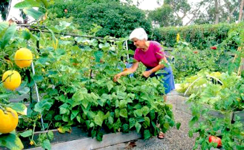 http://www.vegetablegardener.com/assets/uploads/posts/2606/kg08-raised-beds-01_lg.jpg