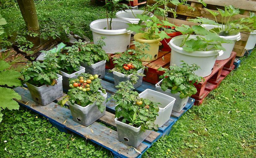 Photo credit: WVC P1100561 - Experimental pallet garden.