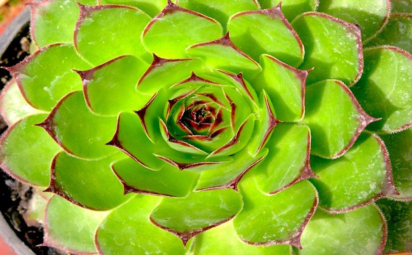 Succulents are drought-tolerant