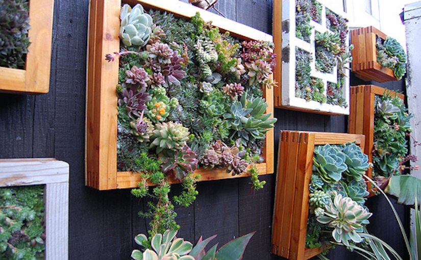 succulent-garden-faroutflora