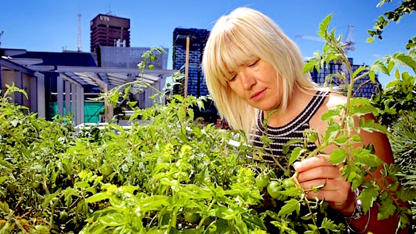 Grow edibles on rooftops