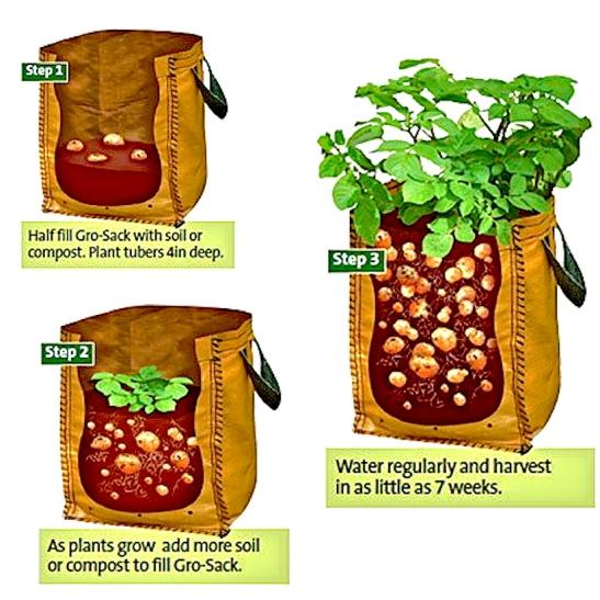 * Bag - potatoes - Photo Tio Miguelito's Garden - product_3161_large copy.jpg