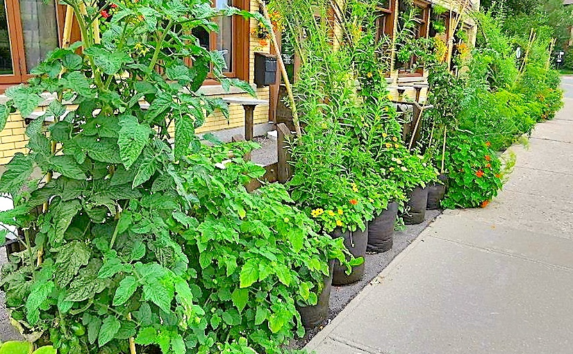 Grow your own containerherbs