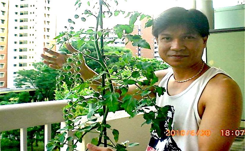 Photo credit: Edrick Tobias Molina (Tokyo - * Balcony - Tomato cherry - Photo Edrick Tobias Molina 315672_256077184430742_100000853879654_719105_297441517_n copy.jpg