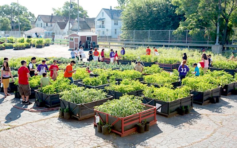 community gardening. Category: Community Gardens. The Importance Of Urban Gardening A