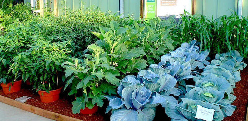 Home grown vegetables   http   perfectgardeningtips com wp content. fruits   CONTAINER GARDENING