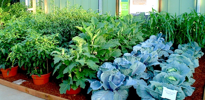 Home grown vegetables - http://perfectgardeningtips.com/wp-content/uploads/2010/04/container-vegetables.jpg