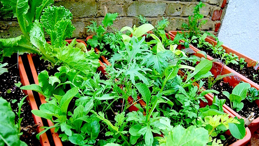 Tips on how to re-use compost in yourcontainers