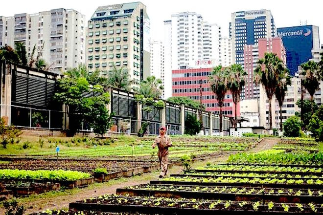 Urban farming in Caracas (Venezuela): http://images.nationalgeographic.com/wpf/media-live/photos/000/516/cache/earth-day-urban-farming-venezuela_51635_600x450.jpg