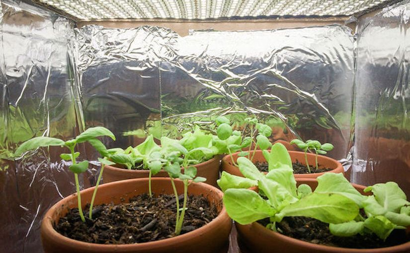 Plant growth in abox