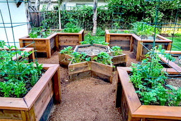 Herbs on raised beds - http://containergardeningpedia.com/wp-content/uploads/2015/02/Herb-Container-Gardening-300x200.jpg