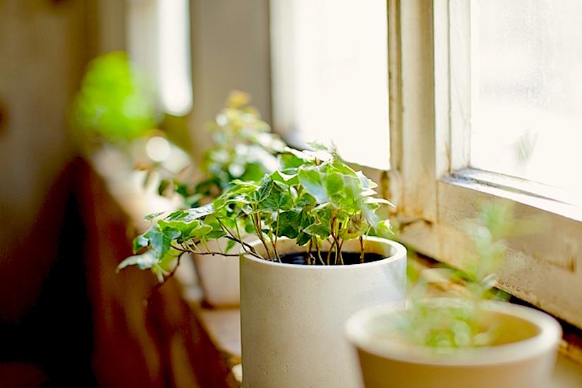 http://media.treehugger.com/assets/images/2015/02/houseplant-benefits.jpg.662x0_q100_crop-scale.jpg