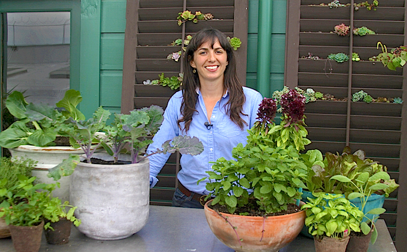 Different aspects of containergardening