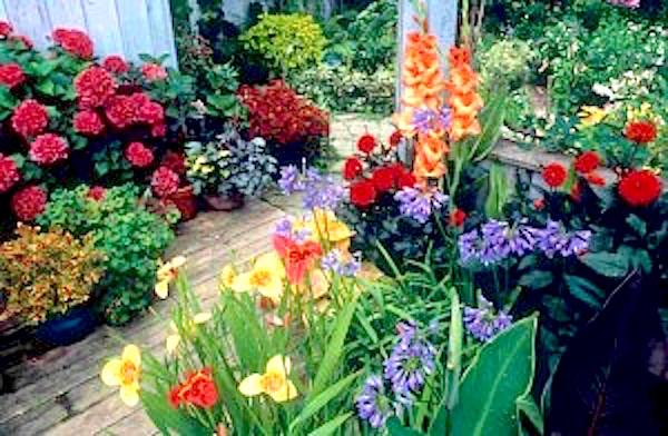 http://containergardeningpedia.com/wp-content/uploads/2015/02/Organic-Container-Gardening1-300x196.jpg