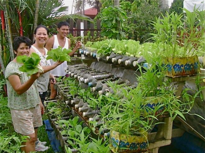 Urban gardening in Davao (Philippines): Jojo ROM's A-risers : https://desertification.files.wordpress.com/2012/01/riser2-jojo-rom-285968_2051946656569_1181604134_31935796_8041270_o.jpg