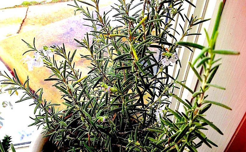 Indoor Plants inWinter