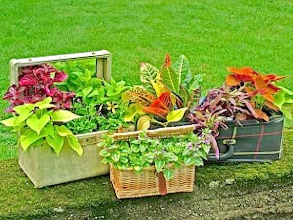 Unique containers container gardening - Unique container gardening ideas ...