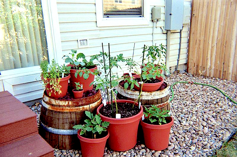 Urban gardening container gardening for Container garden ideas