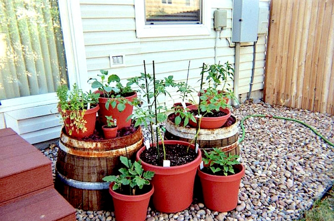 http://images.thefuntimesguide.com/wp-content/blogs.dir/43/files/vegetable-container-gardening-ideas.jpg