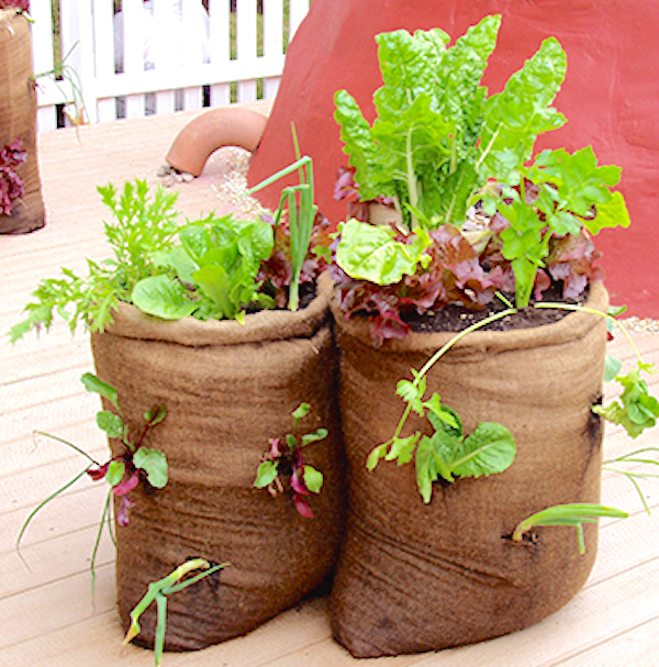 Vegetables can be grown in a wide variety of containers, and they need not be fancy. Even a burlap bag will do. Photo credits: Marilyn Goodson, MSU, http://msue.anr.msu.edu/uploads/images/Plant%20Ag/VeggieBurlapContainers.jpg