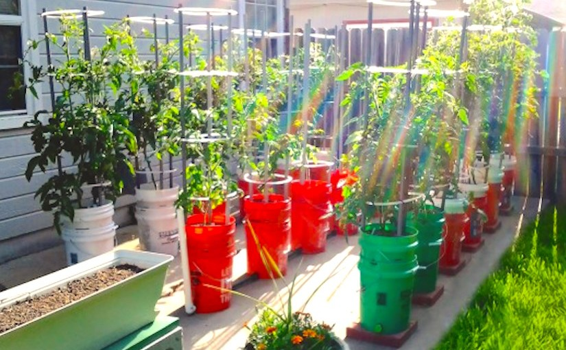 DIY self-watering containers – CONTAINER GARDENING