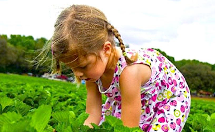 Let kids grow their ownstrawberries