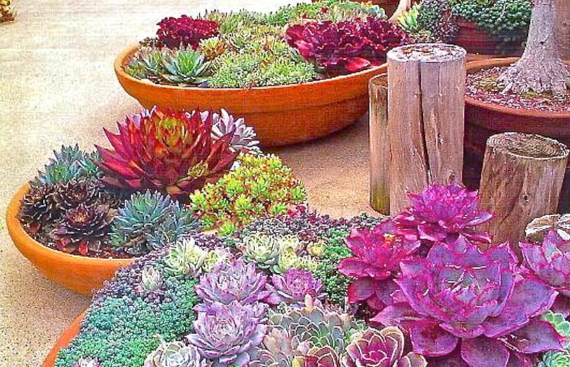 * Bowls with succulents - Photo Jardines y Estanques - 377301_403463536380019_537063956_n_2 copy.jpg