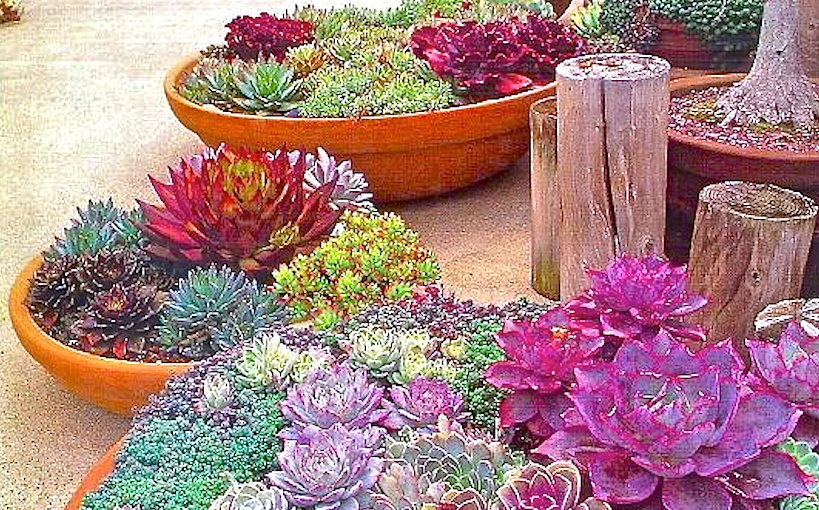 Easy to growsucculents