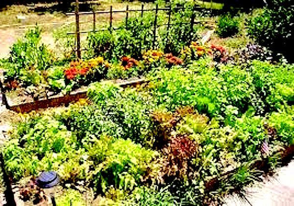 Companion planting withherbs