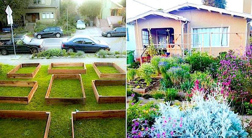 Un potager bio hyper productif enpermaculture