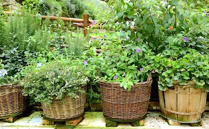 Containers for your herb garden