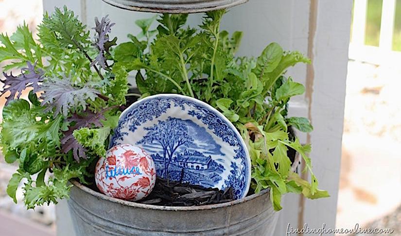 Herbs at home