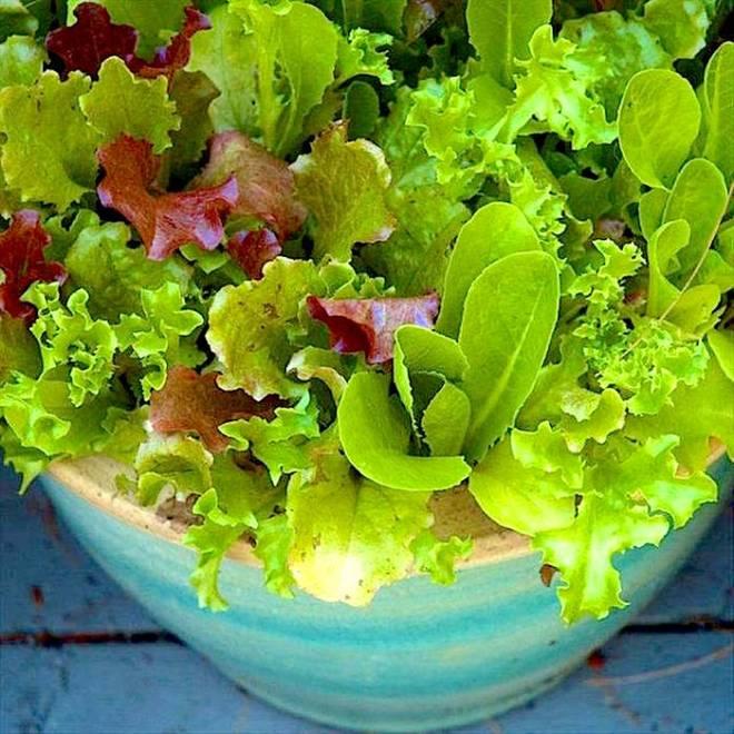Vegetables Container Gardening