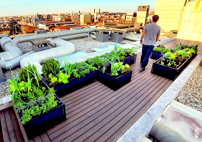Roof garden with Noocity Growbeds - http://media.treehugger.com/assets/images/2015/03/Noocity-growbeds-roof.jpg.662x0_q100_crop-scale.jpg