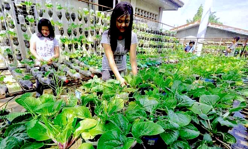 http://newsinfo.inquirer.net/files/2015/03/veggies-660x439.jpg