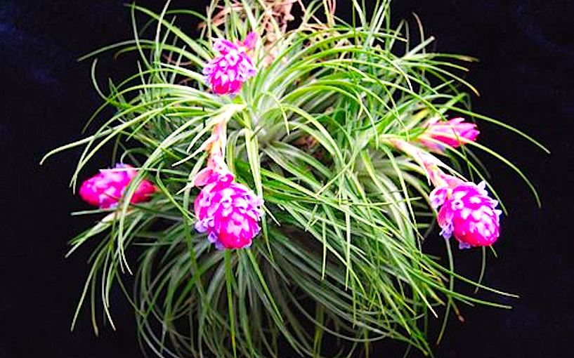 Attractive containers indoors